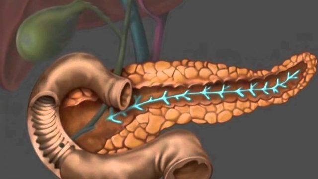 Функции поджелудочной железы и значение для организма