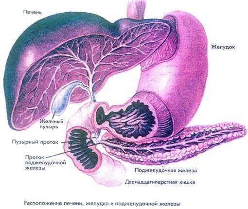 Жировой гепатоз и хронический панкреатит поджелудочной железы