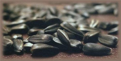 Можно ли семечки при диабете и какие - тыквенные, подсолнуха, при гестационном и 2 типа сахарном диабете