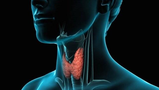 Тиреотом и другие тиреостатики: когда назначают, как принимать препараты для лечения, какое действие оказывают