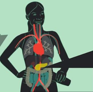 Гормон инсулин: выработка поджелудочной железой, взаимодействие с гормоном роста, адреналином, действие, норма у женщин