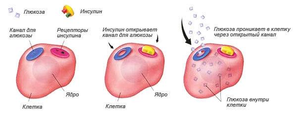 Глюкозотолерантный тест пероральный: как проводится анализ, подготовка, норма, срок получения результатов