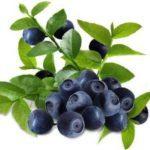 Вишня при диабете: можно ли, польза и вред ягоды, лечебные свойства веточек, что лучше - вишня или черешня при сахарном диабете