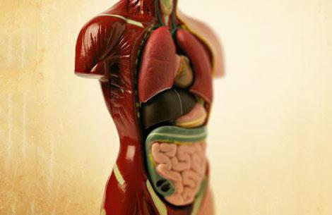 Болезни печени и поджелудочной железы (симптомы и лечение)