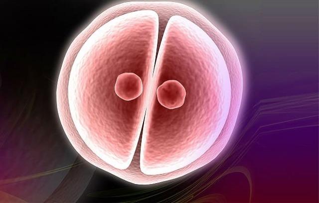 Гормоны при ЭКО: какие сдавать, норма в анализах, гормоны после неудачной попытки, какую роль играет ЛГ, АМГ, стимуляция гормонами