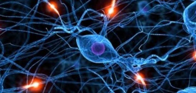 Гипоталамус: строение, особенности, функции у человека, биологическая роль