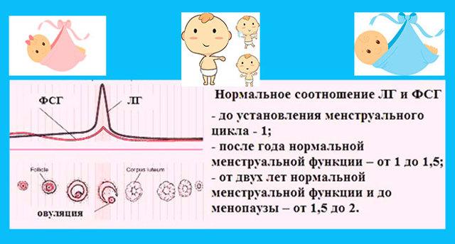 Лютеинизирующи гормон: уровень у девочек, норма у детей, женщин, при беременности, мужчин, в фолликулярную фазу, почему повышен