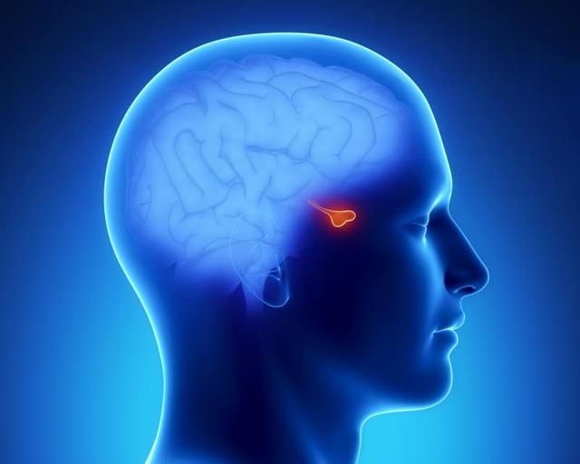 Гиперфункция вилочковой железы: особенности, отличия от гипофункции
