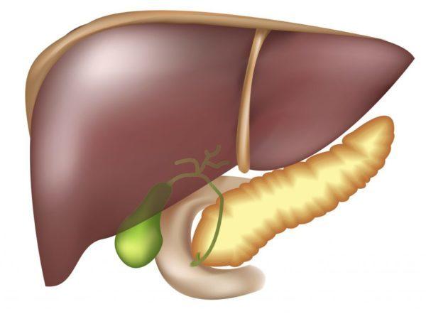 Лечение печени и поджелудочной железы: народные средства